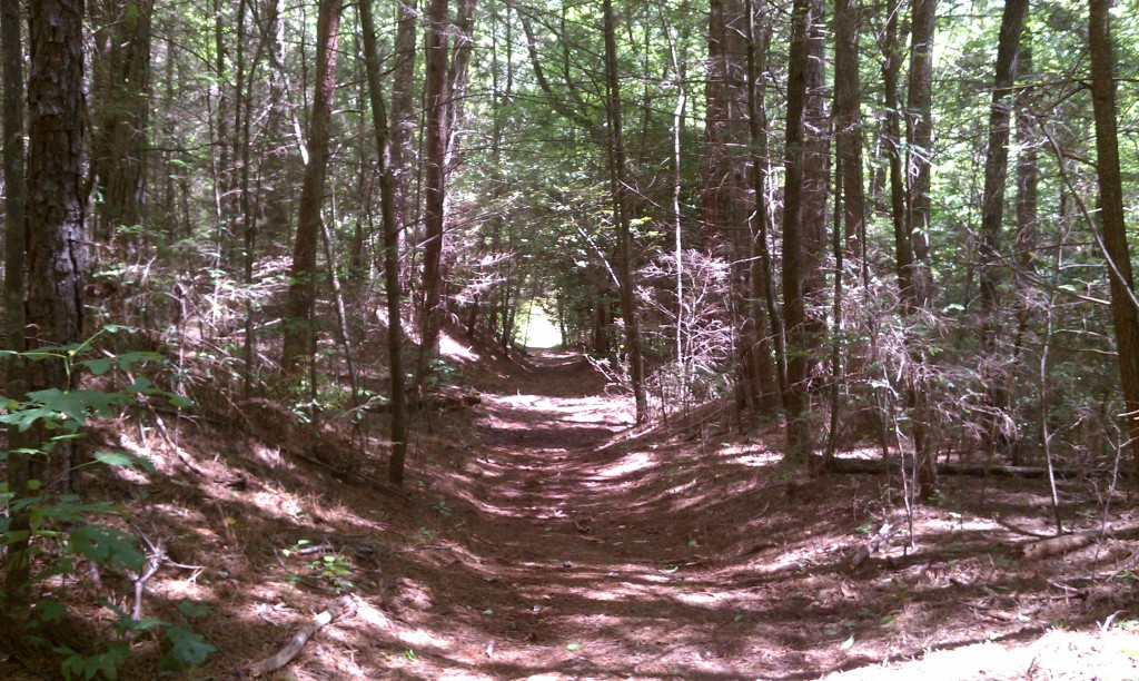 Trail to Hambidge's Rock House